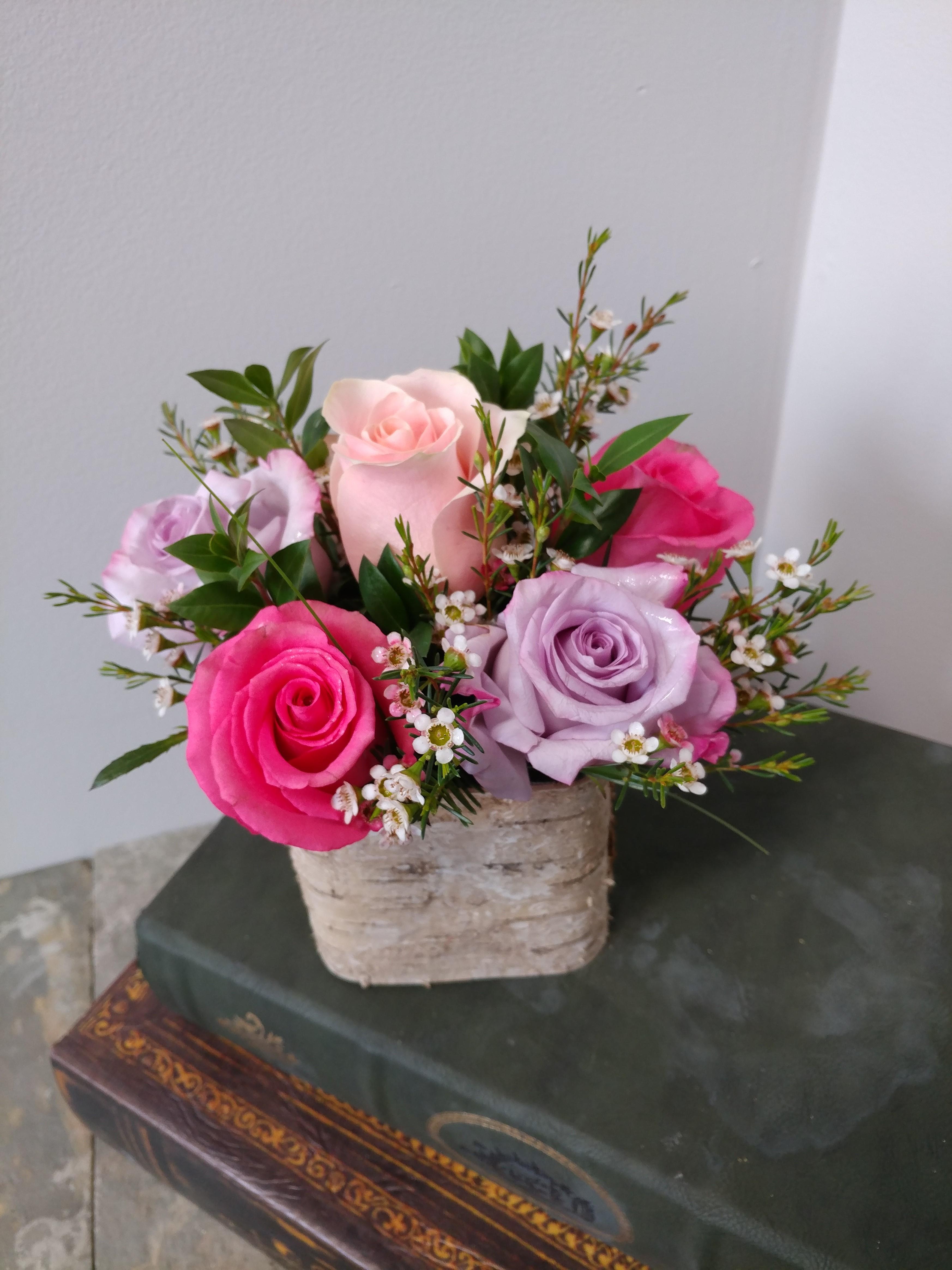 Roses in Birch