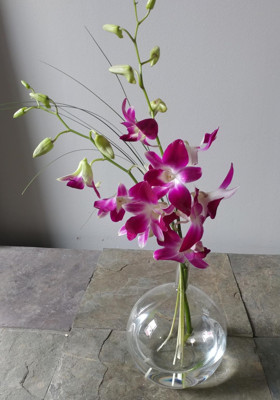 orchids in bubble vase